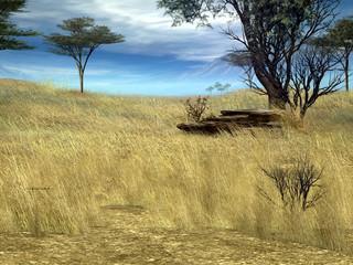 Serengeti Fields