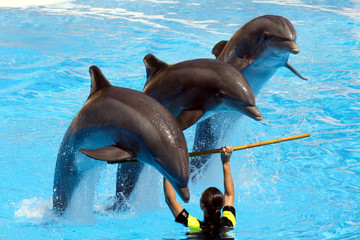 Photo sur Aluminium Dauphins Dolphin Show