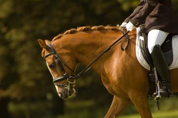 jockey on a beautiful horse