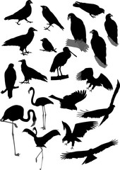 Lot of vector silhouettes of birds
