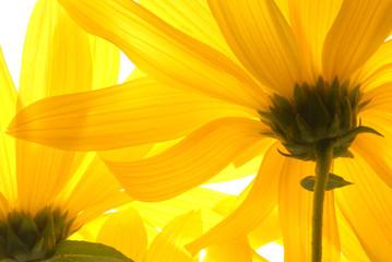 yellow flowers under light