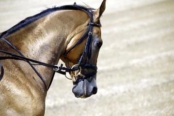 Golden horse of Turkmenistan 2
