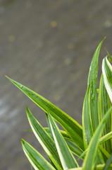 grass blades closeup
