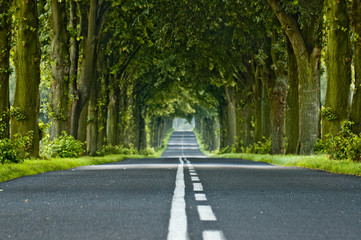 Fototapeta Tree's tunnel obraz