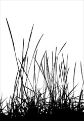 Grass / vector / silhouette. Ideally for your use