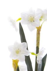 Photo sur Aluminium Beautiful white flowers