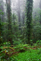 dorrigo world heritage rainforest on a foggy day