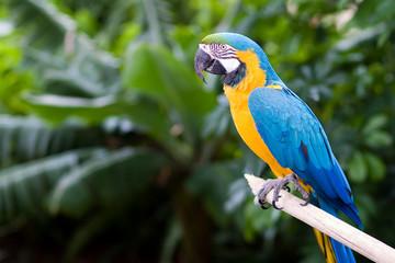 Poster Parrot Guacamayo