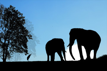 Elephants sur ciel bleu