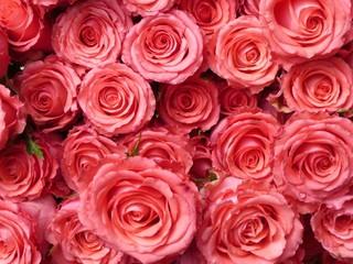 Rosen rosa 5
