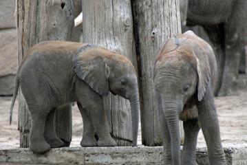 Elefantenkindergarten