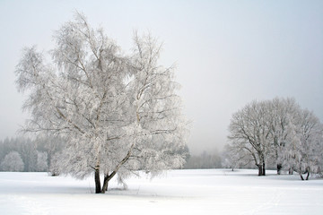 snow landscape with trees