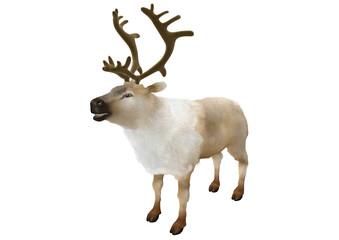 Reindeer caribou standing