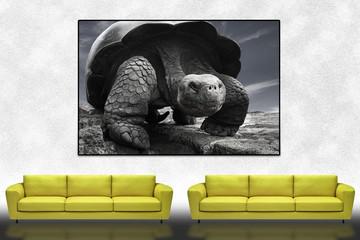 Yellow sofa and Art