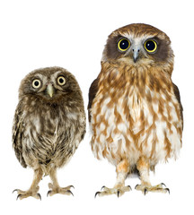 Tuinposter Uil female owl and a owlet