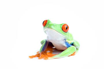 frog posing isolated on white