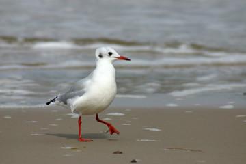 funny seagull on the beach