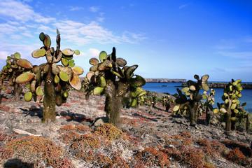 Halapagos Cactus tree landscape