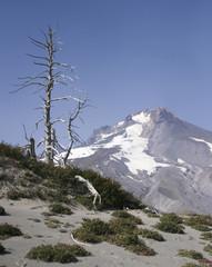 Alpine View of Mt. Hood