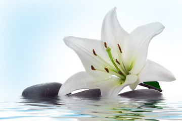 Poster de jardin Nénuphars madonna lily and spa stone in water