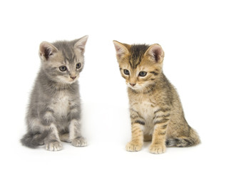 Two kittens on white