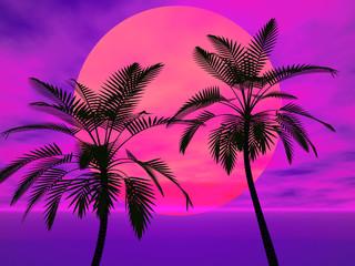 Palme nel sole