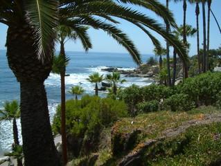 Palmen an der Promenade von Newport Beach, Kalifornien
