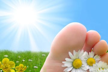 pied paquerette soleil vacances