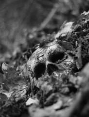 tilted unearthed skull