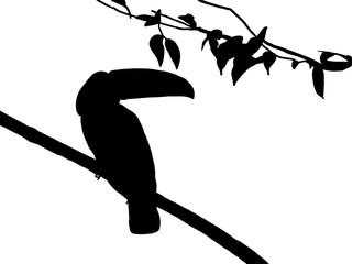 Bird Silhouette Branch