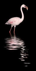 Flamingo bei Nacht