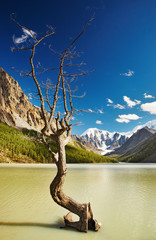 Wall Mural - Mountain landscape with lake and dead tree