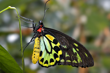 green and black butterfly
