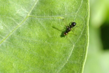 tiny black wasp 1.