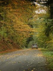 Car drives down autumn road