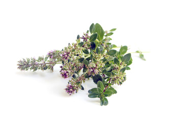 Bunch of fresh herbs thyme on white background