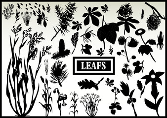 Collection of vector leaf outlines