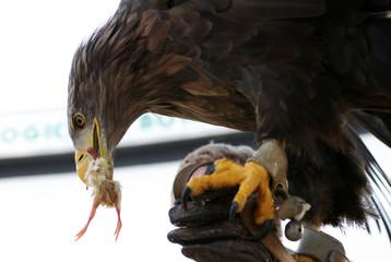eagle 52