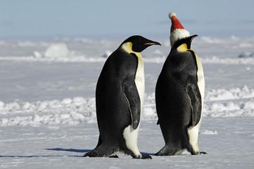 Penguin pair at Xmas