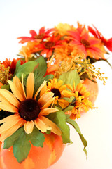 Isolated Halloween Flowers