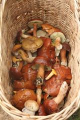 A full basket edible mushrooms