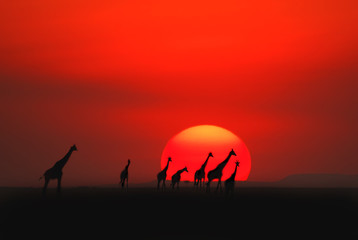 Photo sur Toile Rouge African sunset.