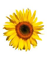 Symbol of Summer
