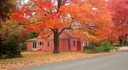 House and maple tree in Autumn
