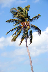 Palm Trees Key  West Florida