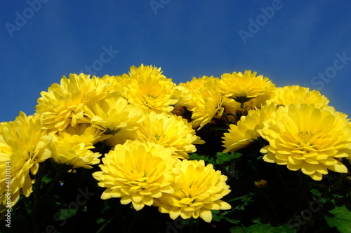 Gelbe Herbstblumen Stock Photo And Royalty Free Images On Fotolia