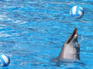 happy dolphin 2