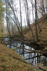 beaver's lake