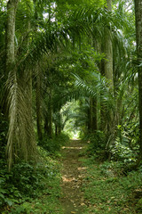 walking path in the tropical forest wide shot