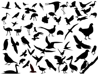 Lots of birds vectors silhouette